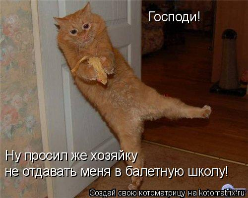 Котоматрица: Господи!  Ну просил же хозяйку  не отдавать меня в балетную школу!
