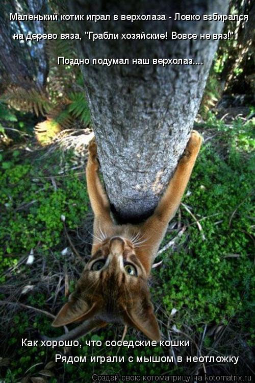 """Котоматрица: Маленький котик играл в верхолаза - Ловко взбирался на дерево вяза, """"Грабли хозяйские! Вовсе не вяз!"""" Поздно подумал наш верхолаз.... Рядом игр"""