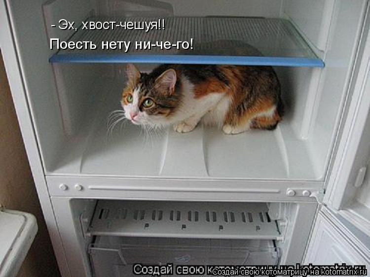 Котоматрица: - Эх, хвост-чешуя!! Поесть нету ни-че-го!