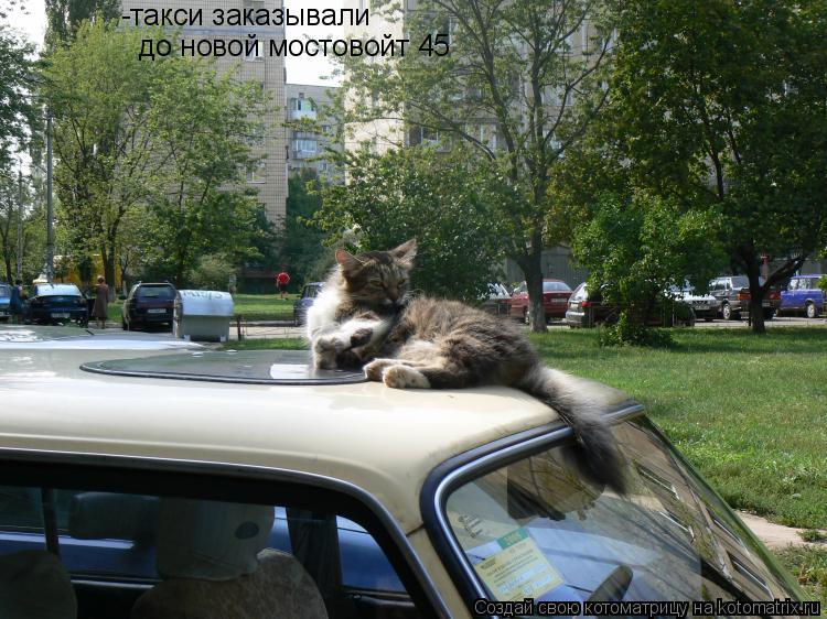 Котоматрица: -такси заказывали до новой мостовойт 45