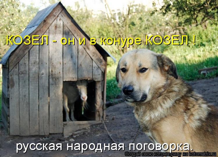 Котоматрица: КОЗЕЛ - он и в конуре КОЗЕЛ ! русская народная поговорка.