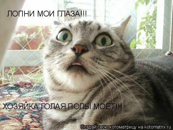 Котоматрица: ЛОПНИ МОИ ГЛАЗА!!!  ХОЗЯЙКА ГОЛАЯ ПОЛЫ МОЕТ!!!