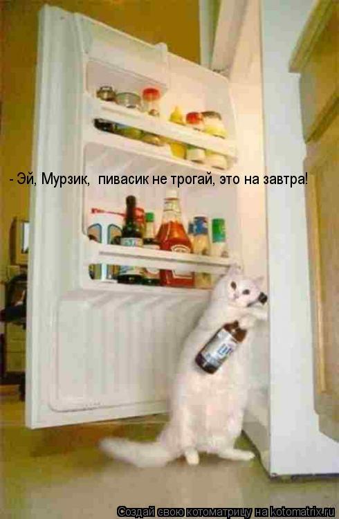 Котоматрица: - Эй, Мурзик,  пивасик не трогай, это на завтра!