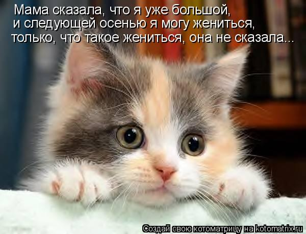 Котоматрица: Мама сказала, что я уже большой, и следующей осенью я могу жениться, только, что такое жениться, она не сказала...