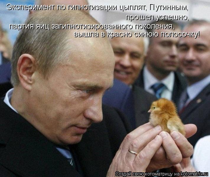 Котоматрица: Эксперимент по гипнотизации цыплят, Путинным,  прошел успешно,  партия яиц загипнотизированного поколения,  вышла в красно синюю полосочку!
