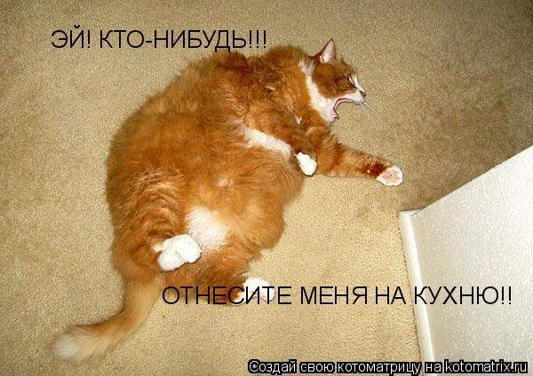 Котоматрица: ЭЙ! КТО-НИБУДЬ!!! ОТНЕСИТЕ МЕНЯ НА КУХНЮ!!