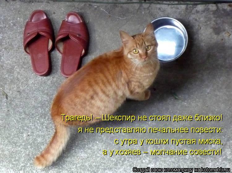 Котоматрица: Трагедь! – Шекспир не стоял даже близко! я не представляю печальнее повести: с утра у кошки пустая миска, а у хозяев – молчание совести!
