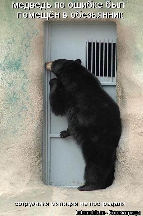 Котоматрица: медведь по ошибке был  помещён в обезьянник сотрудники милиции не пострадали