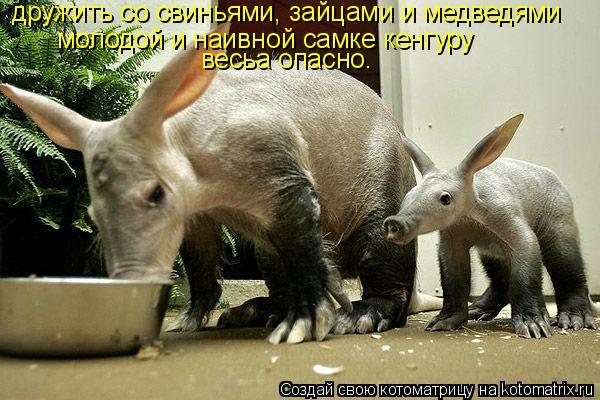 Котоматрица: дружить со свиньями, зайцами и медведями молодой и наивной самке кенгуру  весьа опасно.