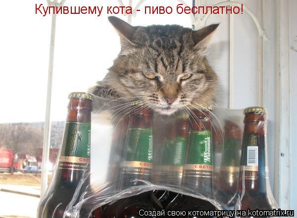 Котоматрица: Купившему кота - пиво бесплатно!