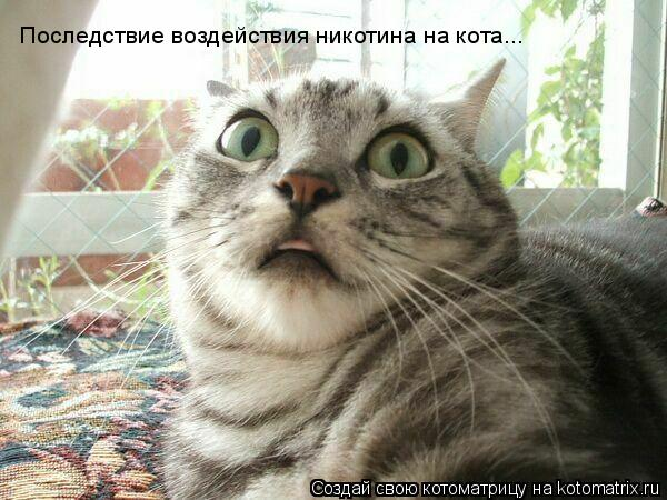 Котоматрица: Последствие воздействия никотина на кота...