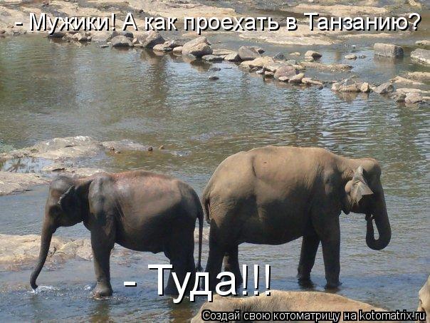 Котоматрица: - Мужики! А как проехать в Танзанию? - Туда!!!