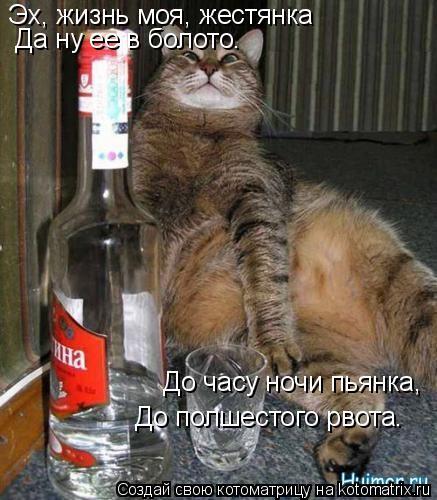 Котоматрица: Эх, жизнь моя, жестянка   Да ну ее в болото.   До часу ночи пьянка,   До полшестого рвота.