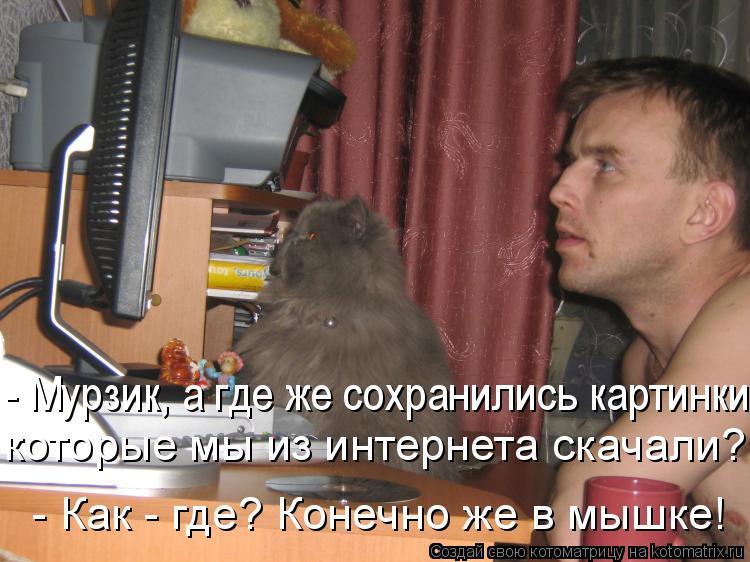 Котоматрица: - Мурзик, а где же сохранились картинки которые мы из интернета скачали?  - Как - где? Конечно же в мышке!