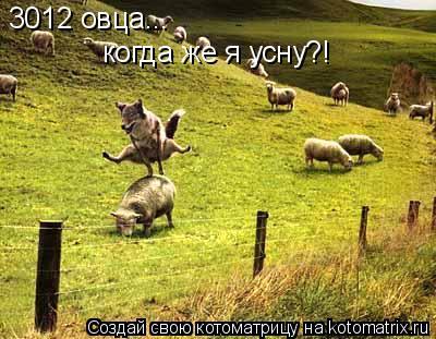 Котоматрица: 3012 овца... когда же я усну?!