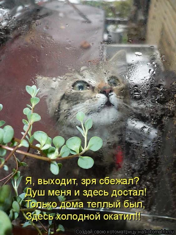 Котоматрица: Здесь холодной окатил!! Только дома теплый был, Душ меня и здесь достал! Я, выходит, зря сбежал?