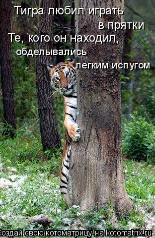 Котоматрица: Тигра любил играть  в прятки Те, кого он находил, обделывались  легким испугом