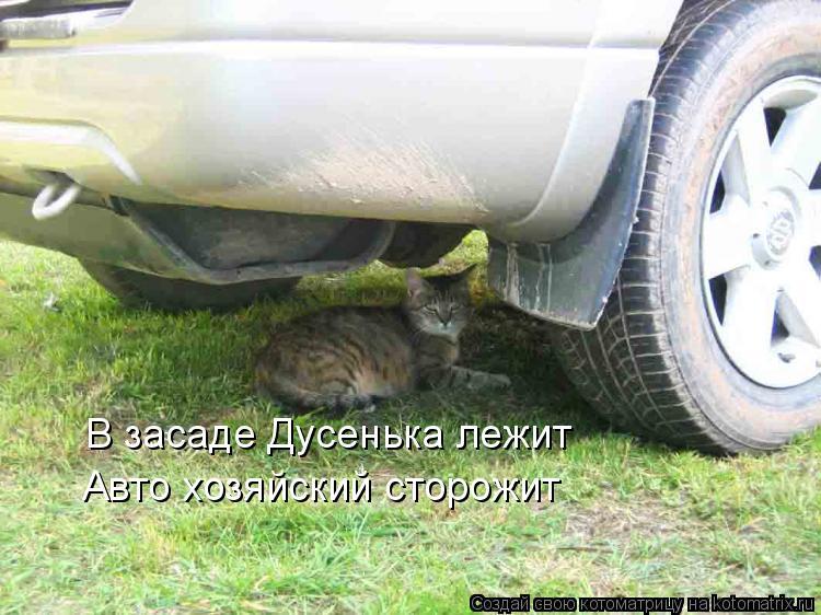 Котоматрица: В засаде Дусенька лежит Авто хозяйский сторожит