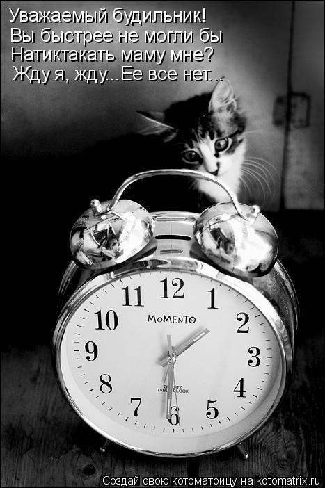 Котоматрица: Уважаемый будильник! Вы быстрее не могли бы Натиктакать маму мне? Жду я, жду...Ее все нет...