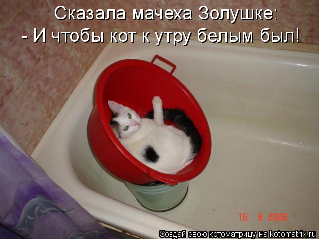 Котоматрица: Сказала мачеха Золушке: - И чтобы кот к утру белым был!