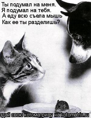 Котоматрица: Ты подумал на меня. Я подумал на тебя. А еду всю съела мышь Как ее ты разделишь?