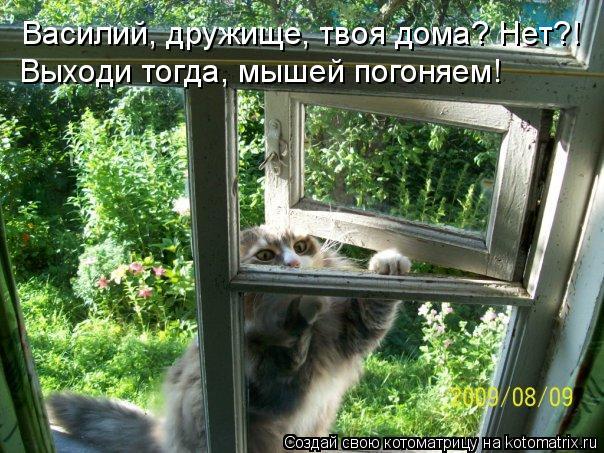 Котоматрица: Василий, дружище, твоя дома? Нет?!  Выходи тогда, мышей погоняем!