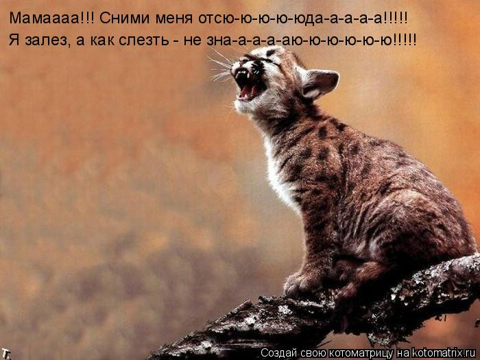 Котоматрица: Мамаааа!!! Сними меня отсю-ю-ю-ю-юда-а-а-а-а!!!!! Я залез, а как слезть - не зна-а-а-а-аю-ю-ю-ю-ю-ю!!!!!