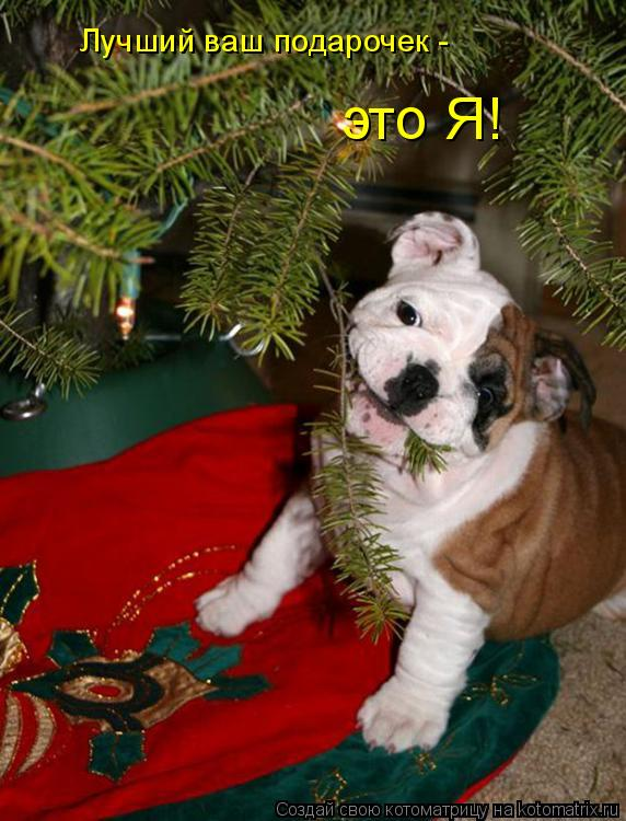 Котоматрица: Лучший ваш подарочек -  это Я!