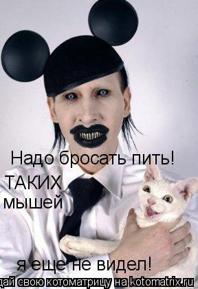Котоматрица: Надо бросать пить! ТАКИХ  мышей я еще не видел!