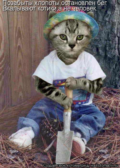 Котоматрица: Позабыты хлопоты,остановлен бег. Вкалывают котики,а не человек.