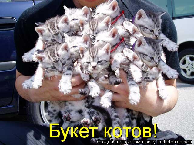 Котоматрица: Букет котов!