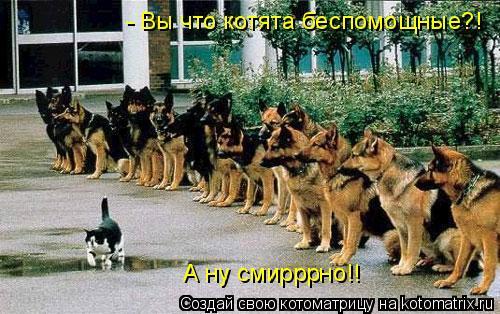 Котоматрица: - Вы что котята беспомощные?! А ну смирррно!!