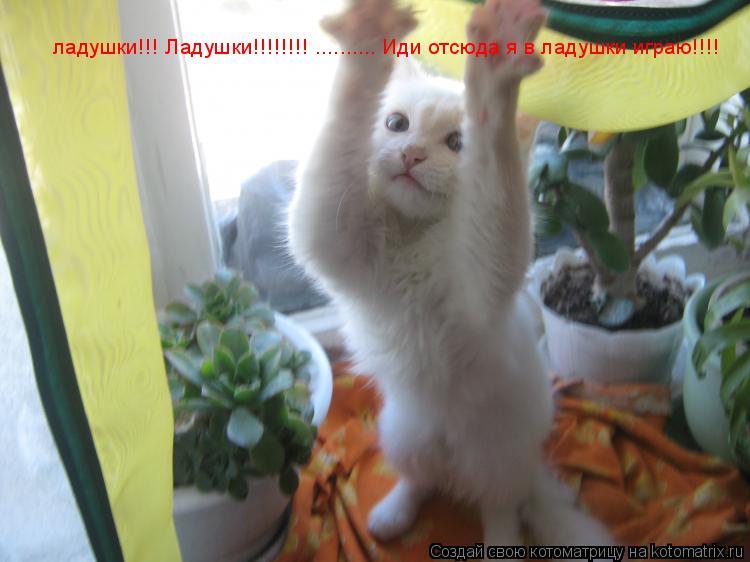 Котоматрица: ладушки!!! Ладушки!!!!!!!! .......... Иди отсюда я в ладушки играю!!!!