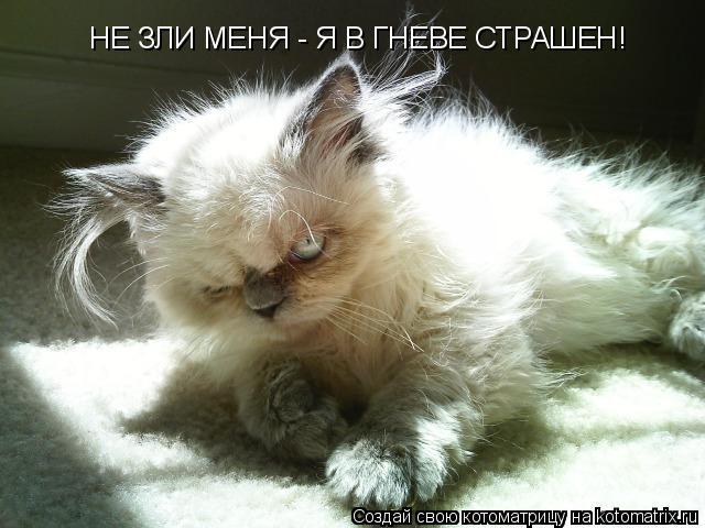 Котоматрица: НЕ ЗЛИ МЕНЯ - Я В ГНЕВЕ СТРАШЕН!
