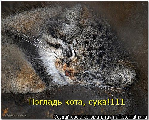 Котоматрица: Погладь кота, сука!111