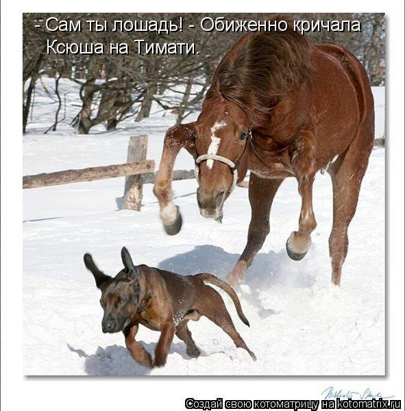 Котоматрица: - Сам ты лошадь! - Обиженно кричала  Ксюша на Тимати.