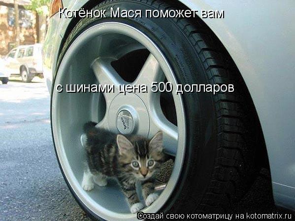 Котоматрица: Котёнок Мася поможет вам с шинами цена 500 долларов