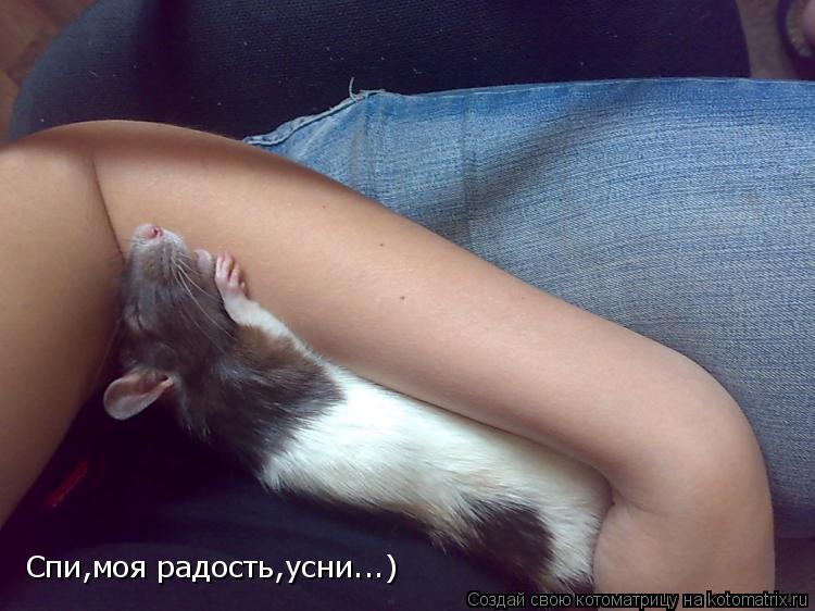 Котоматрица: Спи,моя радость,усни...)