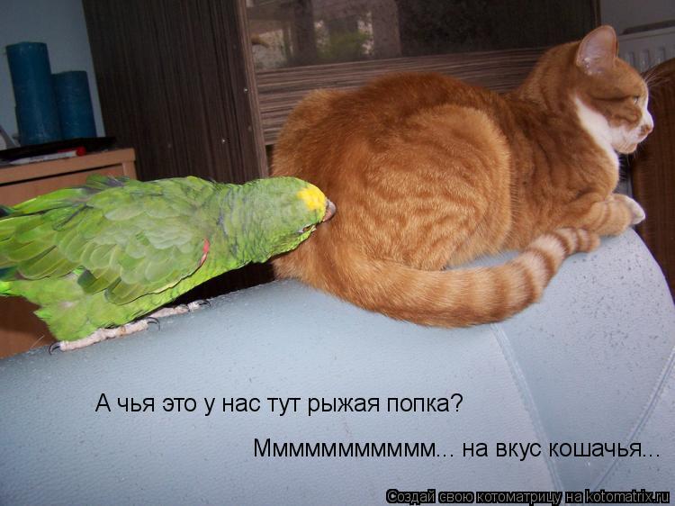 Котоматрица: А чья это у нас тут рыжая попка? Ммммммммммм... на вкус кошачья...
