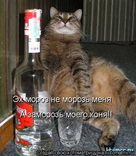 Котоматрица: Эх мороз не морозь меня  А заморозь моего коня!!