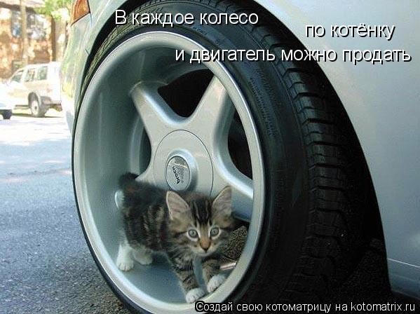 Котоматрица: В каждое колесо  по котёнку  и двигатель можно продать
