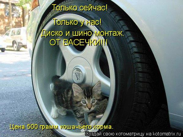 Котоматрица: Только сейчас! Только у нас! Диско и шино монтаж. ОТ ВАСЕЧКИ!!! Цена 500 грамм кошачьего корма.