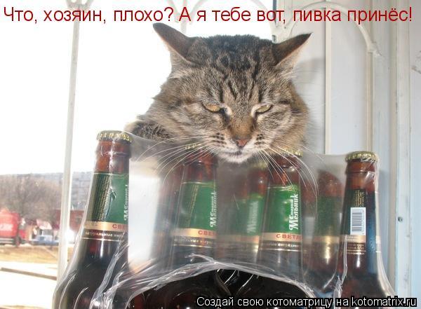 Котоматрица: Что, хозяин, плохо? А я тебе вот, пивка принёс!