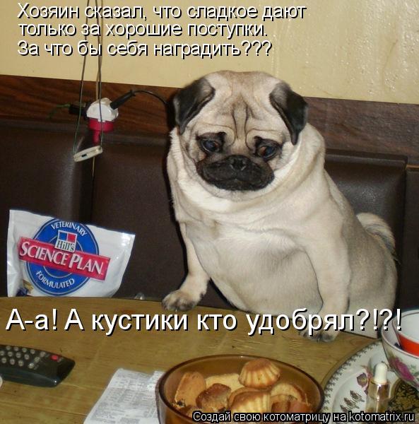 Котоматрица: Хозяин сказал, что сладкое дают  только за хорошие поступки. За что бы себя наградить??? А-а! А кустики кто удобрял?!?!