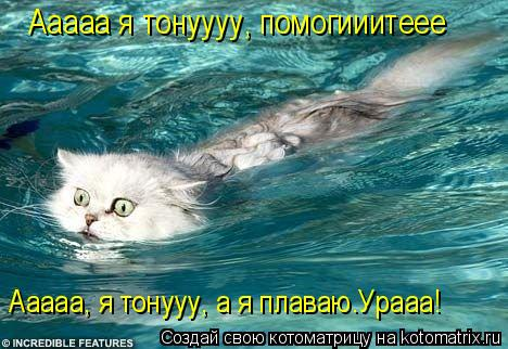 Котоматрица: Ааааа я тонуууу, помогииитеее Ааааа, я тонууу, а я плаваю.Урааа!