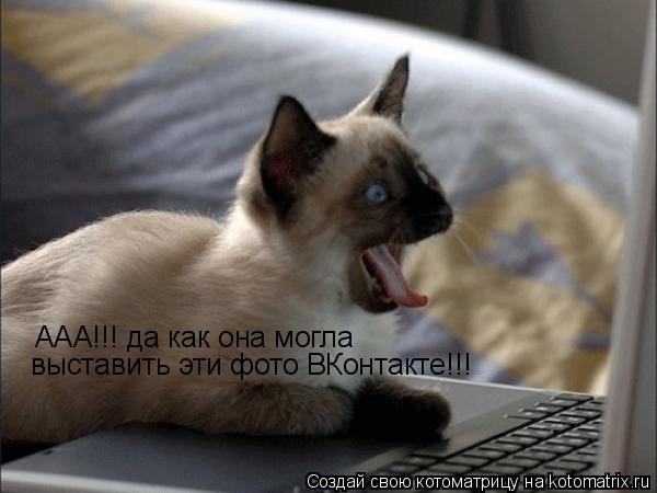 Котоматрица: ААА!!! да как она могла  выставить эти фото ВКонтакте!!!