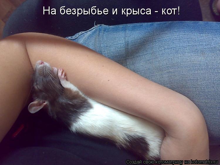 Котоматрица: На безрыбье и крыса - кот!
