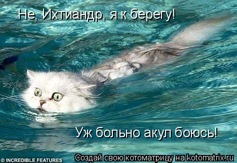 Котоматрица: Не, Ихтиандр, я к берегу! Уж больно акул боюсь!