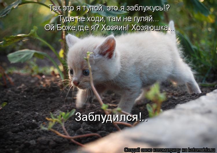 Котоматрица: Так это я тупой, это я заблужусь!? Туда не ходи, там не гуляй... Ой Боже,где я? Хозяин! Хозяюшка... Заблудился!..