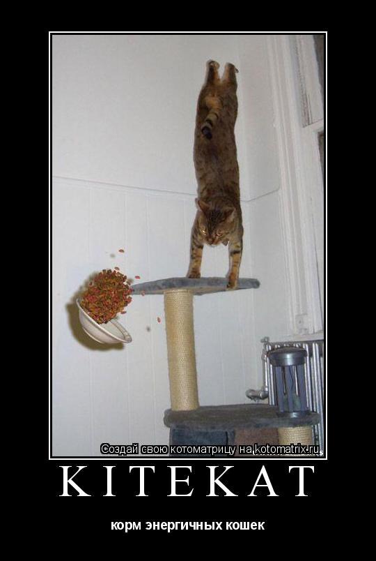 Котоматрица: kitekat корм энергичных кошек